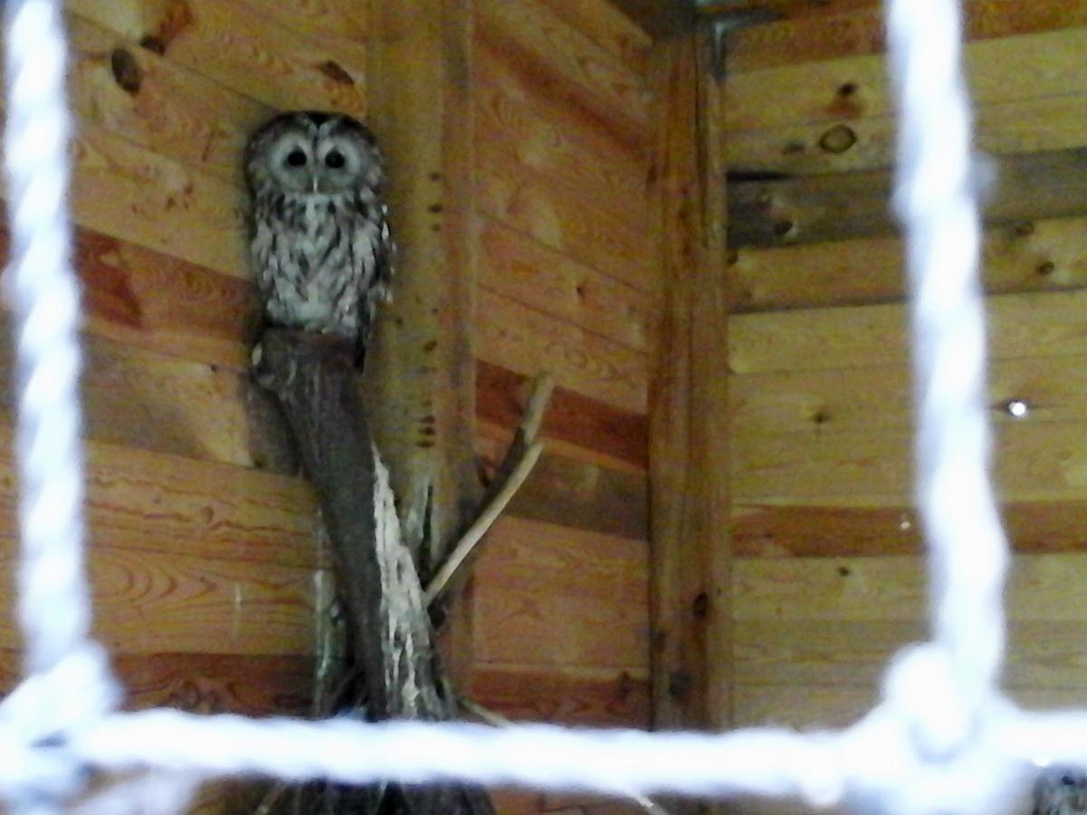 Dômes Ø6-Ø7-Ø30m pour le centre de réhabilitation des oiseaux sauvages, Bukwałd, Pologne